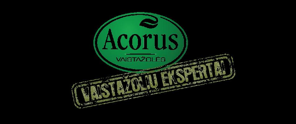 Acorus logotipas